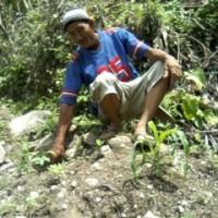 ネグロス西州パンダノン地域のバランゴンバナナ生産者マカオさんは今・・・