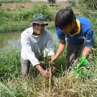 ATINAスタッフとエコシュリンプ生産者が共にマングローブの植樹をしました。