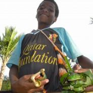 カカオ産地のパプアで『カカオ・キタ』カカオ加工チームが結成され、収穫が始まりました。