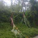 台風30号ヨランダの被害状況について(第2報)