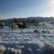 パレスチナに100年に一度とも言われる大雪が降り、大きな被害が出ています。