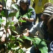 東ティモール・コーヒー生産者が、コーヒーの手入れワークショップに参加しました。