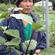 有機肥料は土を育てるんだって!?白菜についた虫を一匹ずつ摘むんですか?(バランゴン生産者のマカオさん、伊賀の有機農家を訪ねる)【213号】