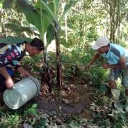 バランゴン生産復興は地力の回復から―台風ヨランダ、ネグロス島復興支援活動