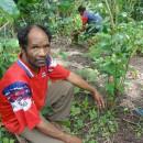 東ティモールで生産者たちは、コーヒー畑の手入れに取り組んでいます。