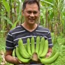 【バナナニュース246号】ビクターさんは今!! ~バランゴンバナナの価値と課題~