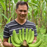 バナナニュース263号:バランゴンバナナ産地紹介 ~ミンダナオ島ツピ~