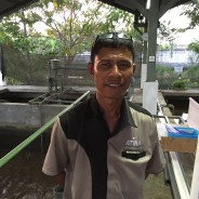 【PtoP NEWS vol.6/201609発行: 縁の下の力持ち】アブラハム・J・パッティラジャワネ(インドネシア/ATINA)