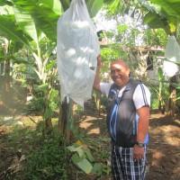 【バナナニュース268号】 バランゴンバナナ生産者紹介 ~西ネグロス州カンラオン市ダニーさん~