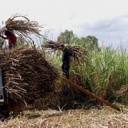 SAVE Negros:ネグロス、環境にやさしい持続可能な農村コミュニティづくり-その1―