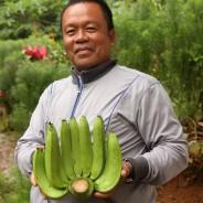 【バナナニュース270号】今年はバランゴンバナナが豊作!