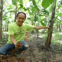 バランゴンバナナ、今年は豊作なんです!
