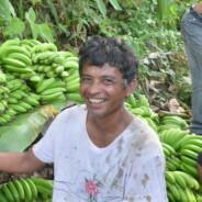 【バナナニュース299号】フィリピン・東ネグロス州マンティケル村