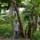 四半世紀を越えてバランゴンバナナを作り続けて~西ネグロス州シライ地域の生産者たち~from フィリピン (PtoP NEWS vol.38 2020.06)