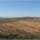 オリーブ苗木を植樹してパレスチナ農民を応援します!