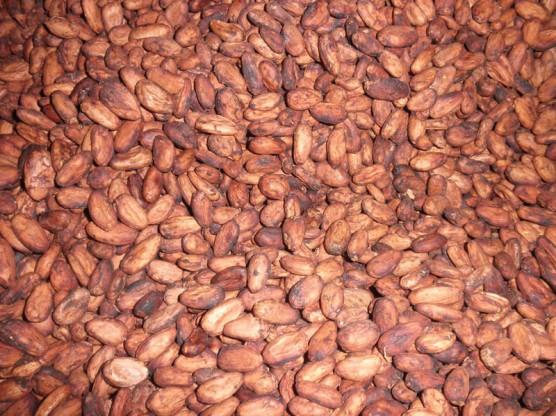 乾燥させたカカオ豆