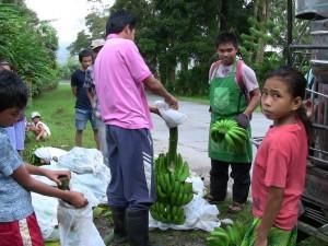 ランドイさんも集荷所にバナナを運び込んできました。