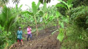 ランドイさんのバナナ畑