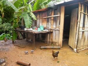 典型的な庭先養鶏の風景