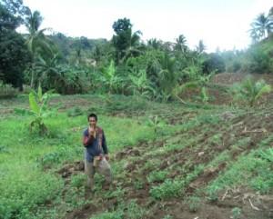 アディさんのトウモロコシと野菜畑