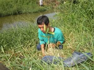 生産者のヘンドリ・シクムバンさん、川沿いに植樹。