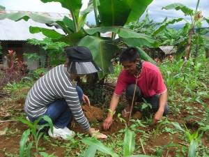 バランゴンバナナ生産者と消費者がいっしょに植樹