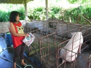 ドロレスさんは豚の飼育もしています。今日はちょっとご機嫌が悪いようです。