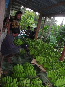 台風被害からすっかり回復して、バナナを運んでくる生産者の顔も明るく見えます。
