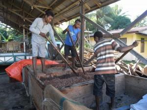 カカオ生豆の発酵工程です。