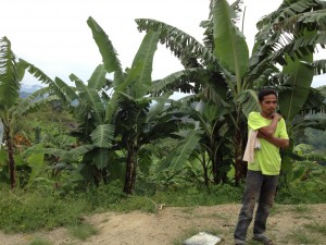 先住民族ボイエットさんの庭先バランゴンバナナ