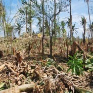 台風30号ヨランダの被害状況について(第3報)パナイ島被害状況について