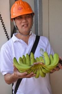 ツピのバランゴンバナナ、よろしく!