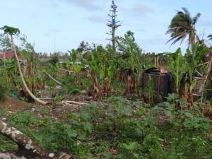 台風の大被害を受けたジョエルさんの畑