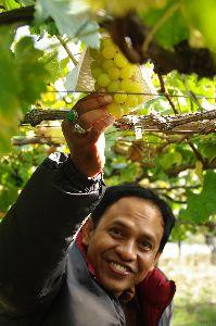 ブドウ園で喜ぶムジャヒディン