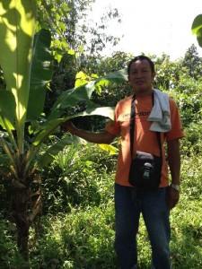 イリハン地域のバランゴンバナナ