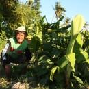 【台風30号ヨランダ復興】台風から半年、確かな復興の歩み~パナイ島~