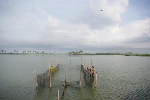 トンボが飛び交うスラウェシ島の池での収獲