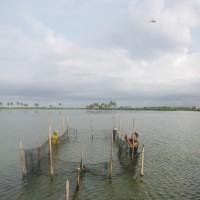 エコシュリンプ:スラウェシ島南部の粗放養殖