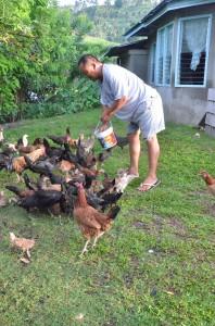 鶏の世話をするボイさん