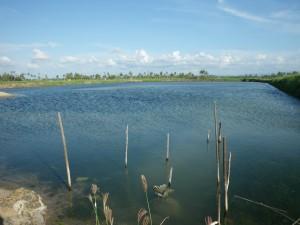 スラウェシ島のエコシュリンプ養殖池
