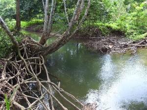 森を流れる川は生活の場でもあります。