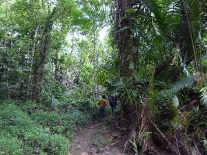 カカオ畑への道