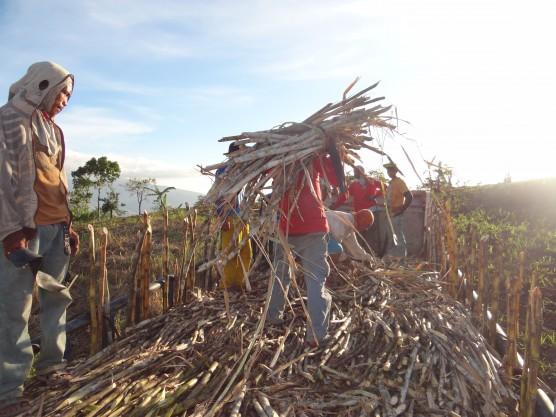 多角的な経営による自立と生態系の保全を試みるネグロス・ダマ農園