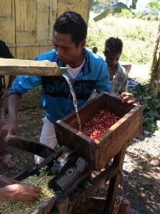 果肉の除去作業をする生産者