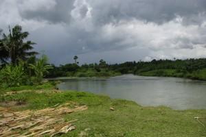 東ネグロス州タンハイ村。川の近くの産地で、海抜0mの圃場もあります。