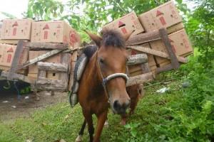 馬を使ってバランゴンバナナを運ぶ生産者(ミンダナオ島ツピ)