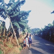 フィリピン・ミンダナオと私たちの今を考える 『バナナと日本人』で描かれた問題は現在、どうなっているか? ミンダナオ訪問団報告