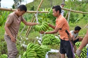 バナナの買付け風景(レイクセブ)
