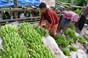 バナナの積み込み(レイクセブ)