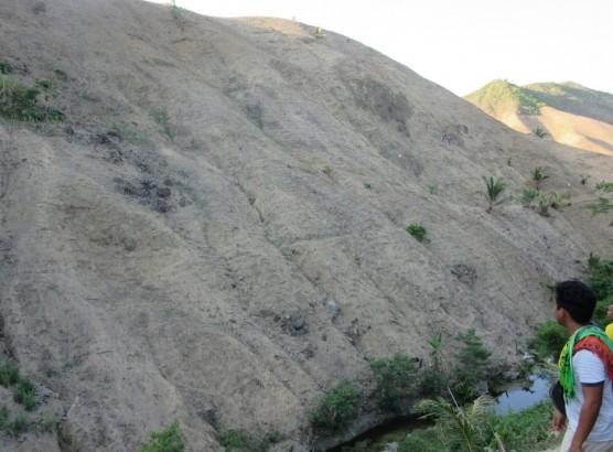 RRコーン耕作の環境影響